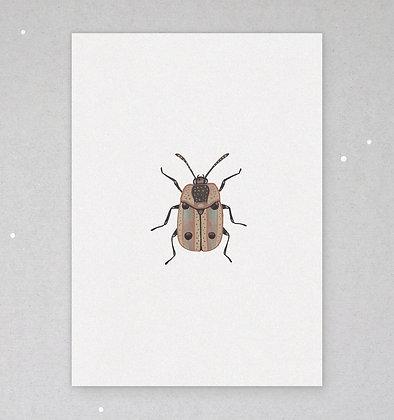 Postkarte | Käfer - Silphidae