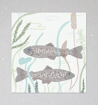 Mini Print | Bachforellen
