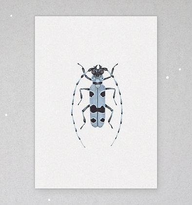 Postkarte   Käfer - Cerambycidae