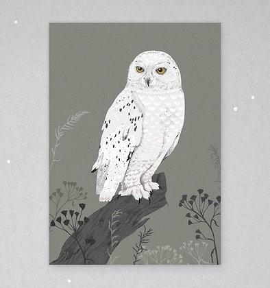 Postkarte | Schnee-Eule
