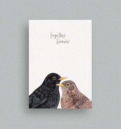 Postkarte | Amselpaar ♂♀