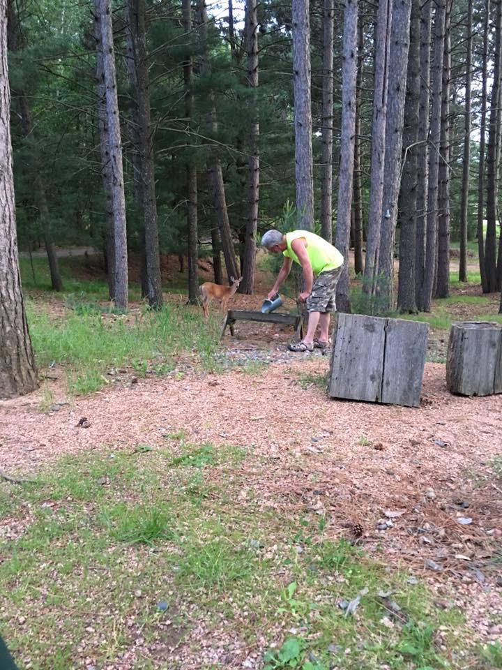 man feeding deer in woods