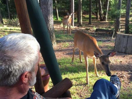 Donny, the deer whisperer