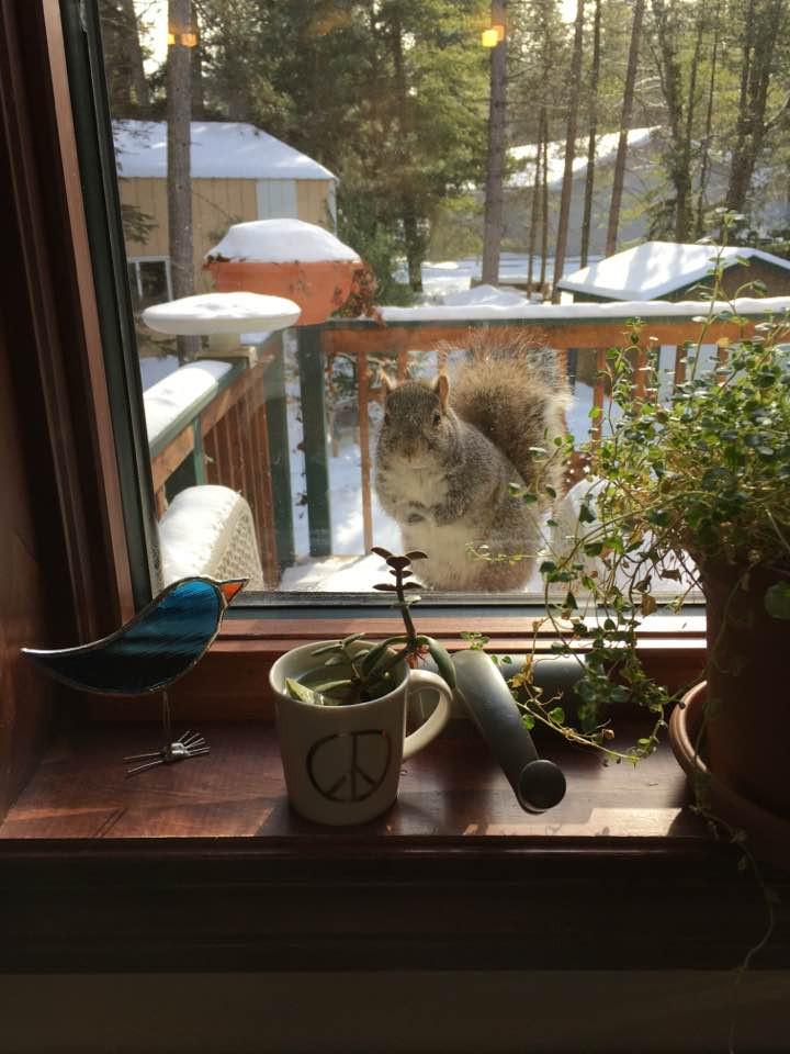 winter in minocqua with squirrel