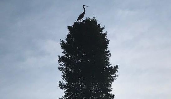 heron on tree