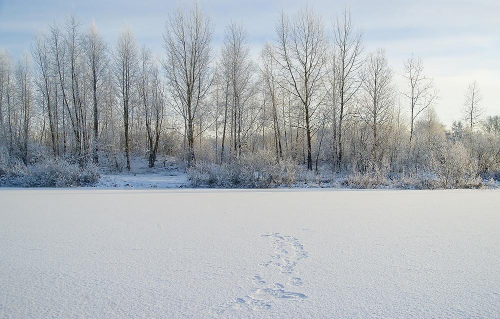 Minocqua Wi frozen lake