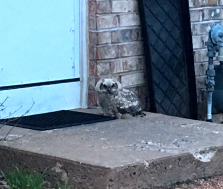 owl perched outside cabin door