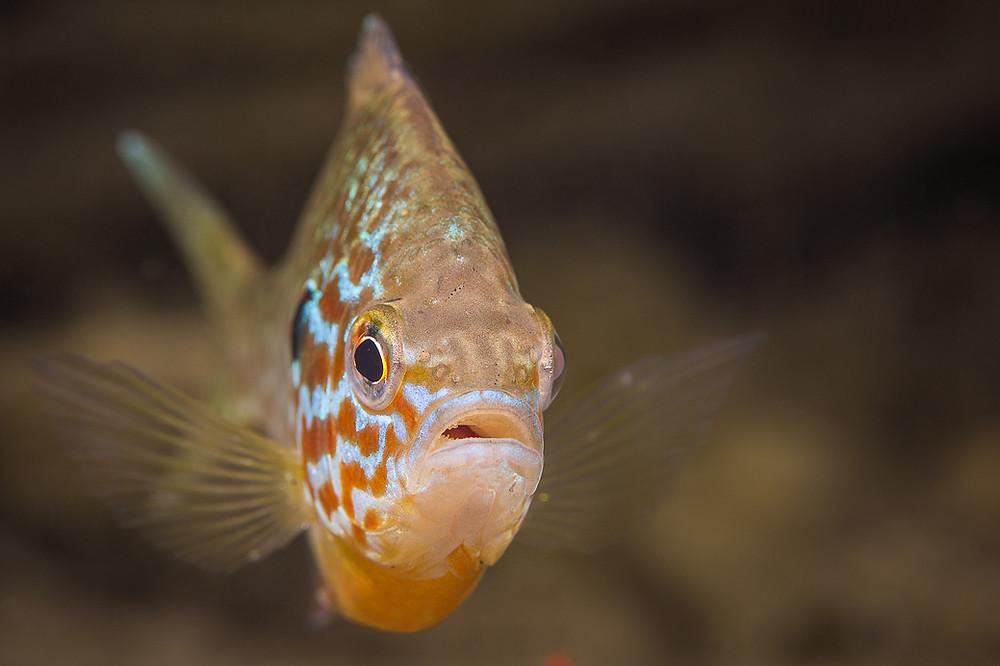 fish under water lake minocqua