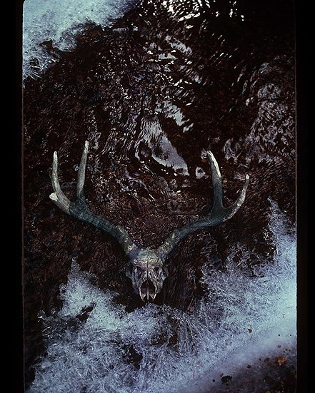 """Deer Skull In Water"""