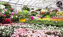 best-greenhouse-1024x598-1.jpg