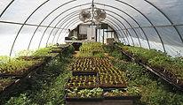 greenhouse-temperature-billtacular-flick