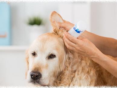 皮膚科医のQ&A ~vol.18~ 「耳掃除に綿棒は使ってはダメ?」