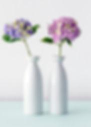 hortensias Fleurs