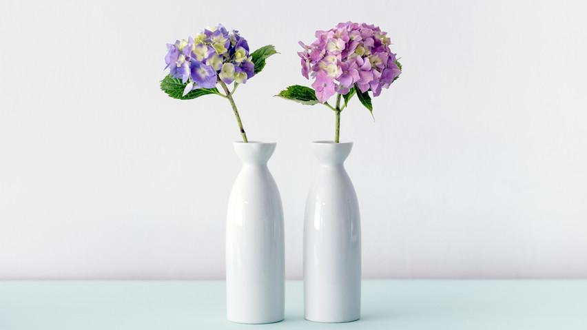 Hydrangea-Blumen