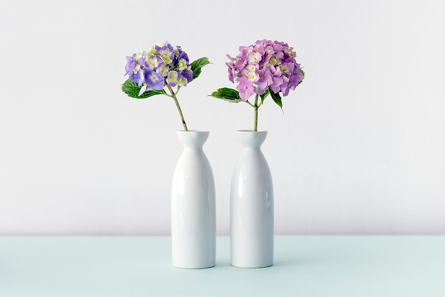 Гортензия Цветы