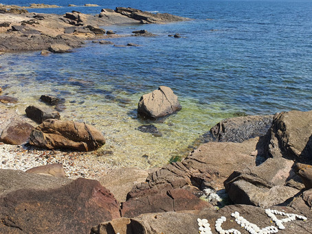 Chips, Windmills and Tidal Pools...