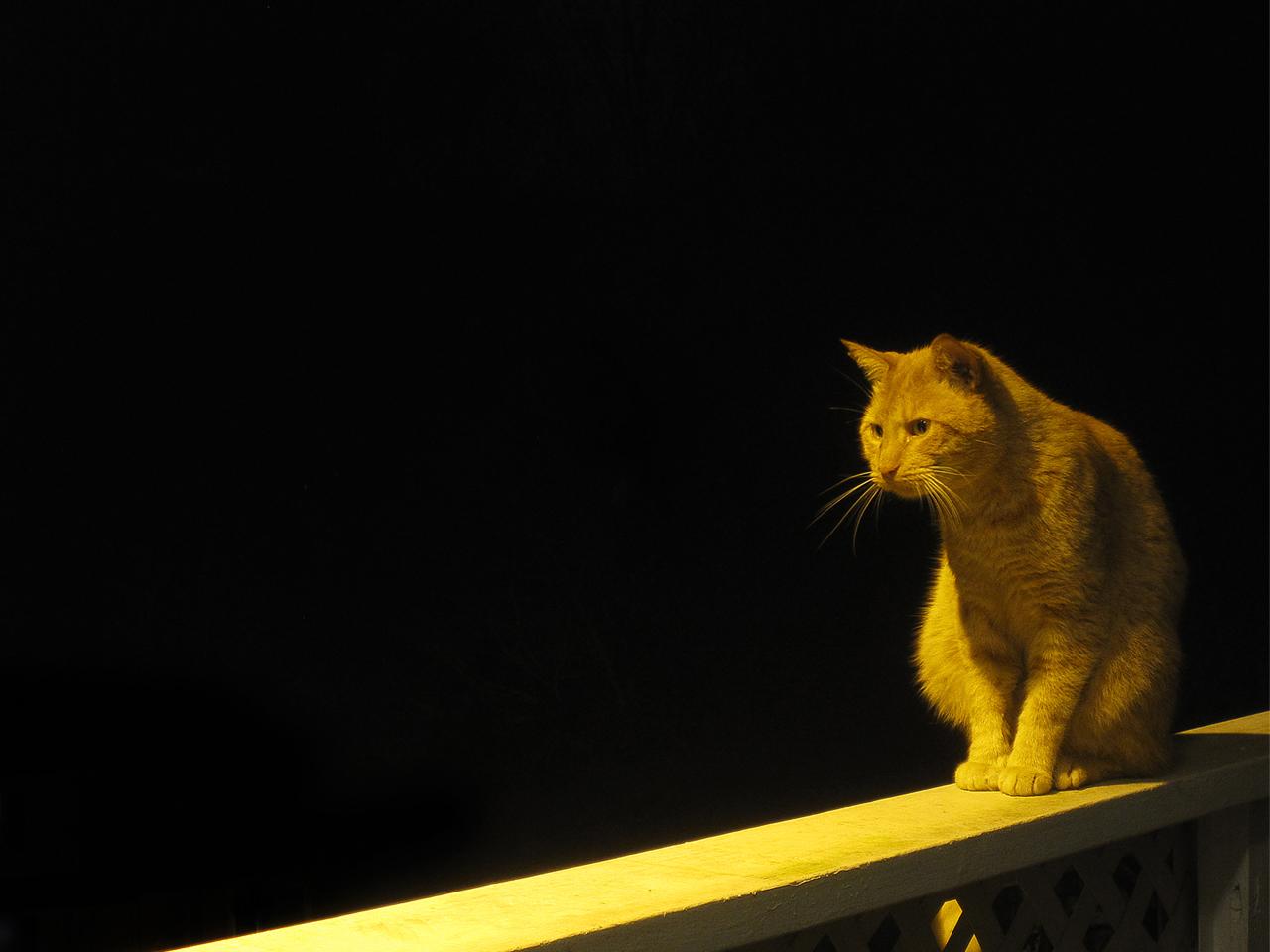 rta filmworks photo cat night