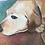 Thumbnail: Acrylic Pet Portrait 8x10