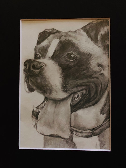 Pet Portraits in Pencil 5x7