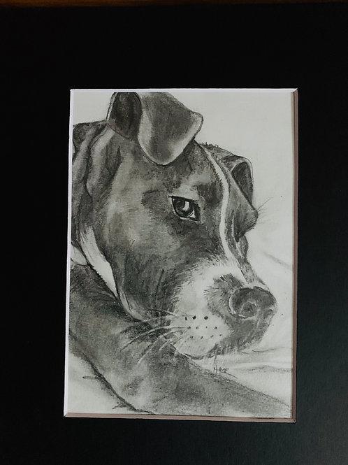 Pet Portrait -Pencil 8x10