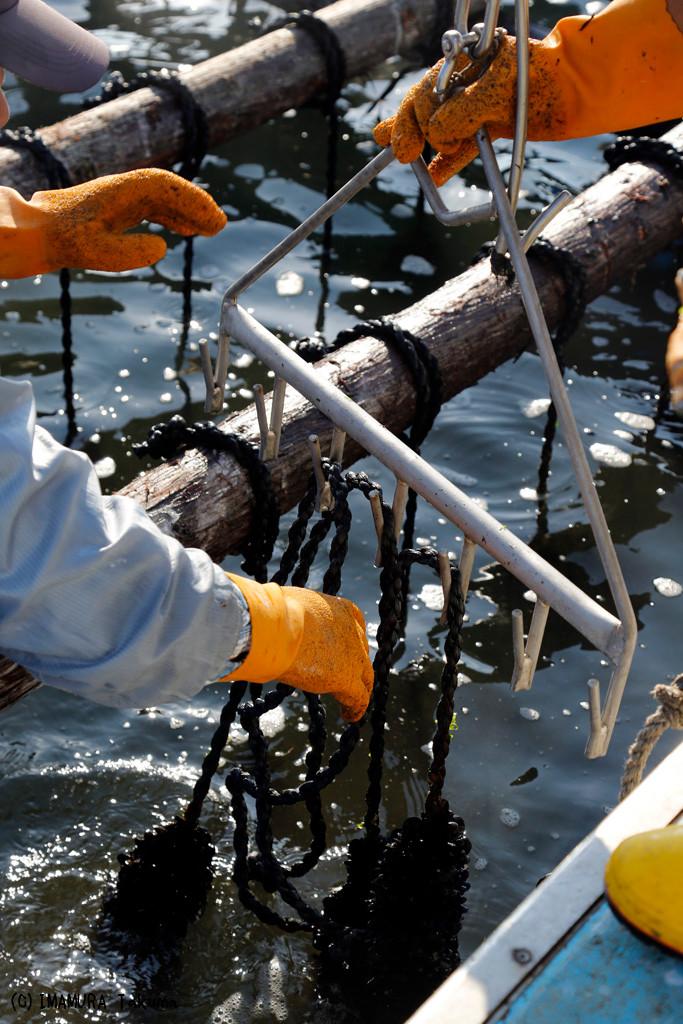 牡蠣がつるされたロープをクレーンにつるす