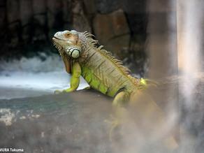 2018.12.20 サイゴン動植物園