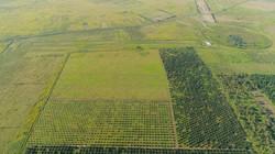 Palmeraies (vue aérienne)