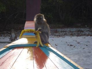 Monkey Zodiac - vízimajom elmélet a gyakorlatban