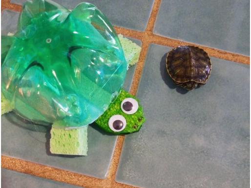 Recyled Turtles!