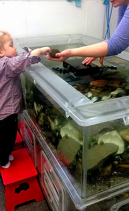 touch tank.png