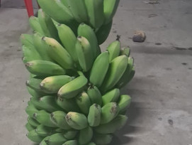 Raw Banana and Coconuts are available for sale!