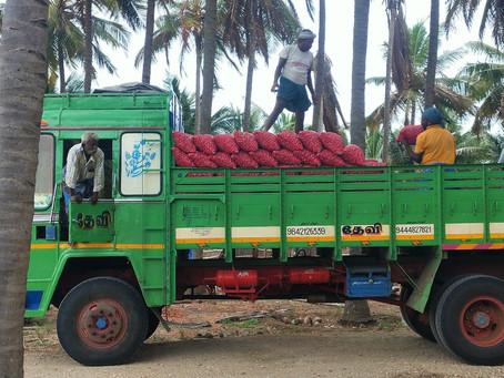 MABIF Incubatee, M/s Sri Suriyan Vegetables FPO