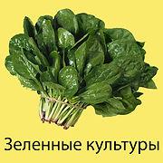 Зелень.jpg