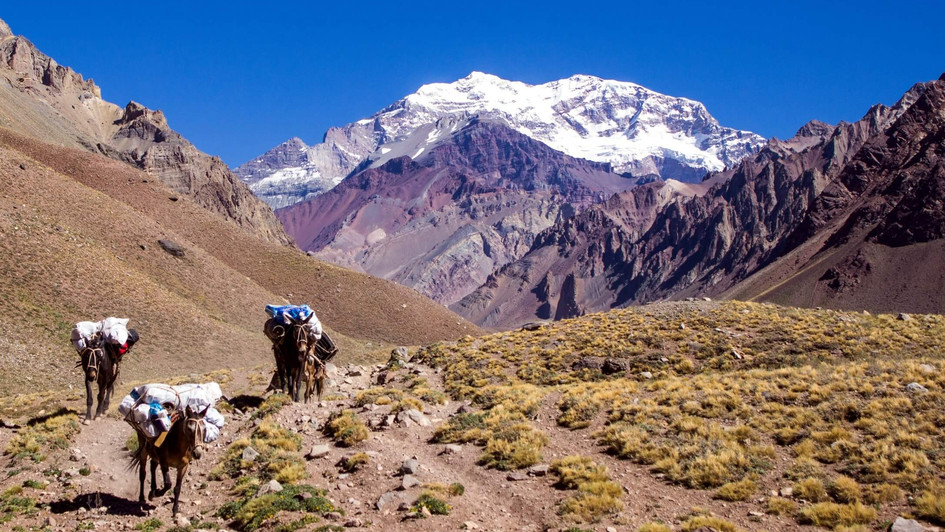 bigstock-Mules-in-the-Aconcagua-Mountai-