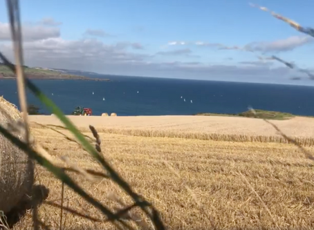 Live video of barley being flavored by the North Sea