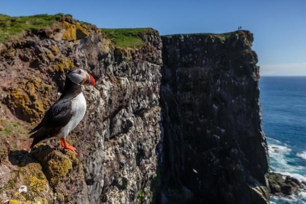 Acantilado Latrabjarg - Qué hacer en Patreksfjörður - El Fiordo de Patrick en Islandia