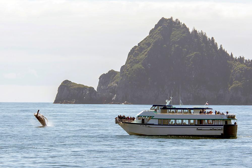 Turistas contemplando una ballena desde un ferry - Rutas de ferry en Islandia