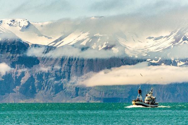 Barco pesquero en Húsavik - Avistamiento de ballenas en Islandia