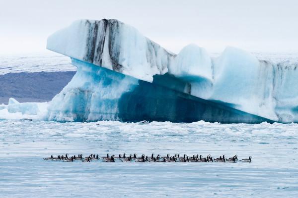 Iceberg en la laguna Jokulsarlon - La laguna glaciar Jokulsarlon en Islandia - Guía para el viajero