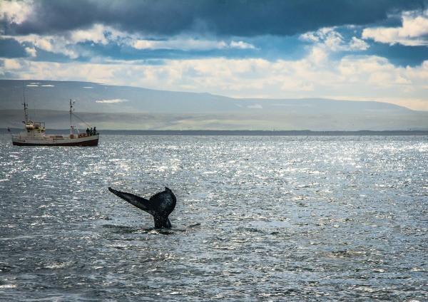 Avistamiento de ballenas en Húsavík - Parada del Círculo de Diamante en Islandia