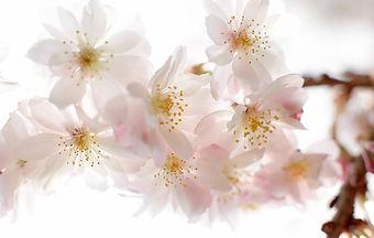 Massage, Aromatherapy, Natural Face Lift Massage, Natural Organic Facials, Holistic Therapies, Organic Skin Care, Essential Oils,