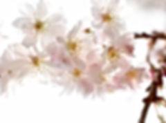 Stress, anxiété, maigrir, arrêter de fumer; une seule adresse: Laurette Perrotte, Hypnothérapeute-Sophrologue à Pont Audemer en Normandie(à coté de le havre, caen, rouen)