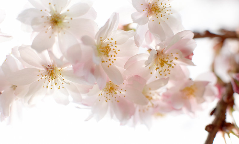 Bach Blütentherapie