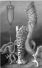 esponja natural marinha