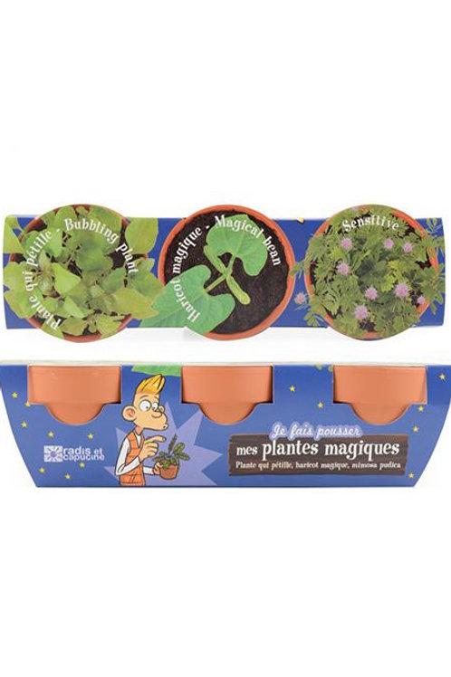 Trio de plantes magiques Radis et capucine