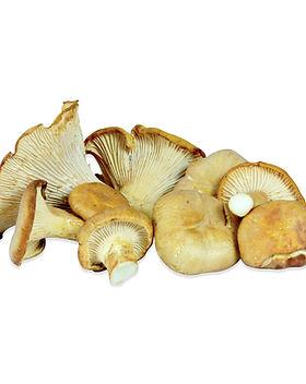 chanterelle fungus.jpg