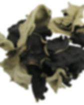 black fungus.jpg
