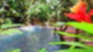 Toku Rain Forest.jpg