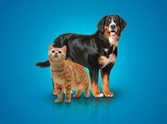 Cão-e-gato-fundo-azul.png