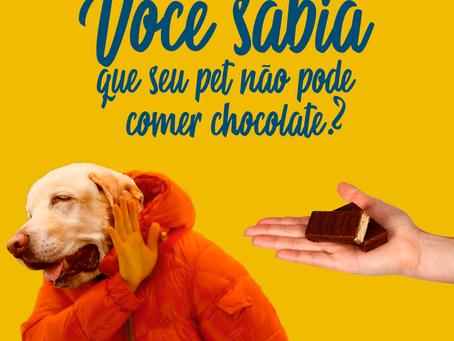 Você sabia que seu pet não pode comer chocolate?